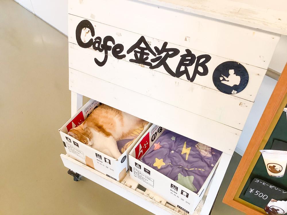 cafe金次郎の看板下で寝ている猫